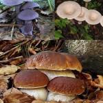 [ Empoli ] Funghi della Toscana: al Palazzo delle Esposizioni la sedicesima edizione della mostra micologica empolese