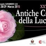 [ Capannori ] XXVI Mostra Antiche Camelie della Lucchesia a Pieve e Sant'Andrea di Compito