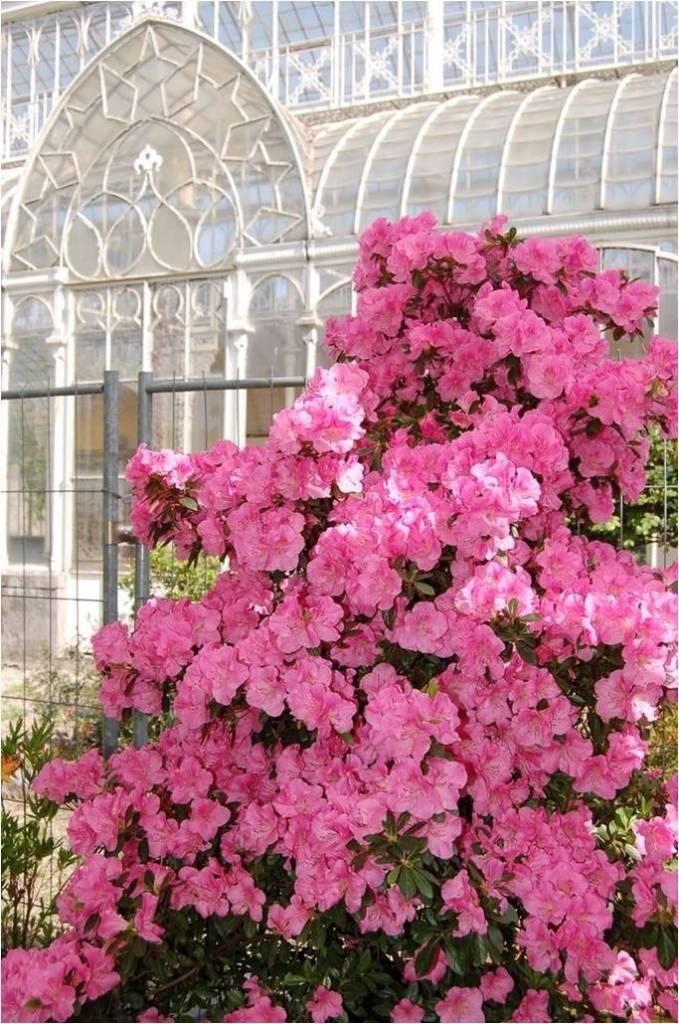 Firenze mostra mercato di piante e fiori al giardino - Giardino dell orticoltura firenze ...