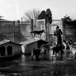 [ Bibbiena ] Tanti per Tutti. Viaggio nel Volontariato Italiano attraverso una mostra nazionale al CIFA
