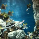 """[ Livorno ] """"Strategie e tecnologie di telecomunicazione in biorobotica marina"""": iniziativa nell'ambito della Primavera della Scienza all'Acquario di Livorno"""