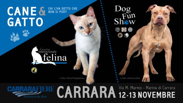 Carrara Cane Gatto Chi Lo Ha Detto Che Non Si Può Esposizione