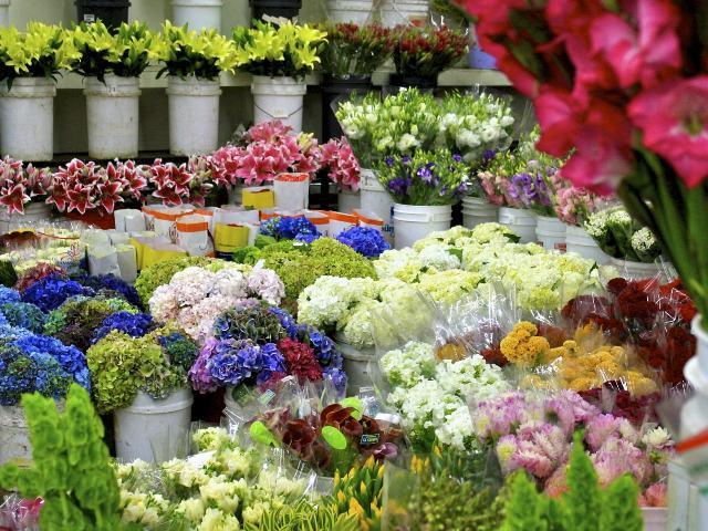 Montelupo fiorentino montelupo in fiore appuntamento for Mostre mercato fiori 2017