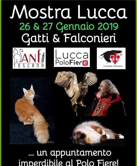 Esposizione Internazionale Felina al Polo Fiere Lucca