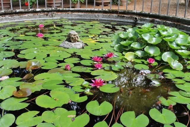 Boboli in fiore, Tour alla scoperta dei tesori naturali del Parco Mediceo