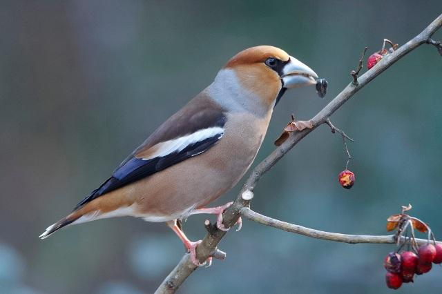 Birdgardening, arbusti per la fauna selvatica: visita a tema nell'oasi di Arnovecchio
